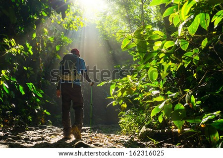Hiker in a nature green forest with sunny light morning.  - stock photo