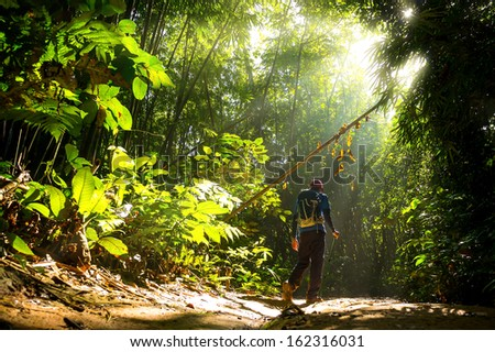 Hiker in a nature green forest with sunny light morning.
