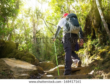 Hiker in a nature green forest with sunny light morning at Kinabalu Mountain,Malaysia,Asia.  - stock photo