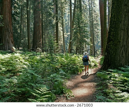 Hiker in Sequoia National Park
