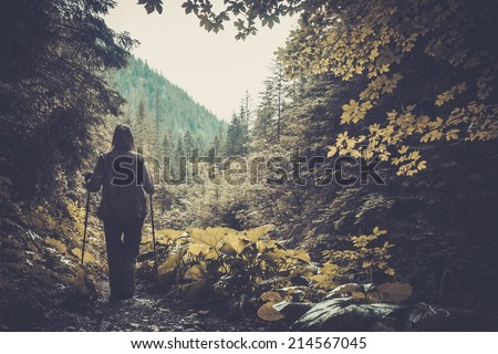 Hiker walking in a mountain forest - stock photo