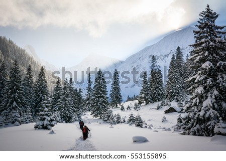 Hikers walking in the forests of Fagaras in Carpathian Mountains, Europe, Winter landscape