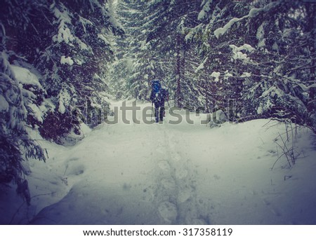 Hikers with a backpacks walking along the road through the forest in the winter mountains. View of snow-covered conifer trees and deep snow. Filtered image:cross processed vintage effect. - stock photo
