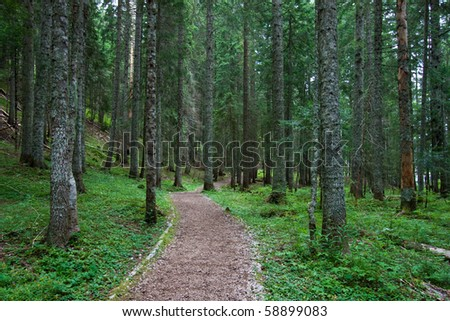 Hiking / Biking trail in the middle of pine tree forest - stock photo