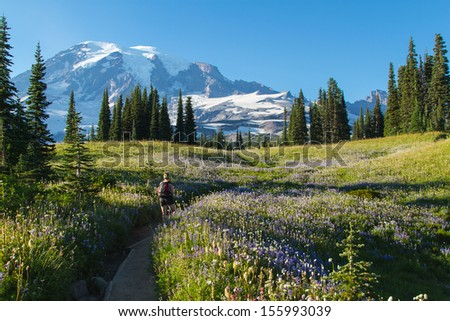 Hiking in the lush meadows in Mount Rainier National Park in the late summer months - stock photo