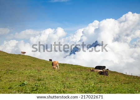 Hiking in the swiss alps nearby Stoos - stock photo