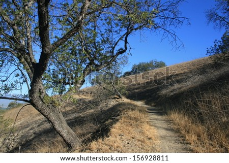 Hiking path heading past a black walnut tree on a hill side, California - stock photo
