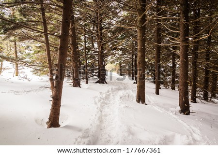 Hiking through a snow covered trail in the forest along the Appalachian Trail in the Great Smoky Mountains National Park - stock photo