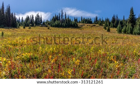 Hiking through the alpine meadows to the top of Tod Mountain in the Sushwap Highlands of central British Columbia, Canada and meeting cows grazing at high elevation - stock photo
