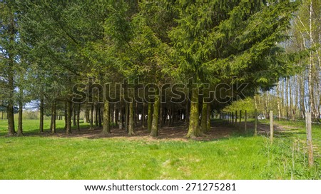 Hiking track through pines and birches in spring - stock photo