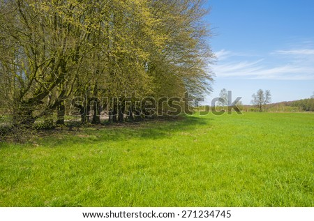 Hiking trail along trees in sunlight in spring