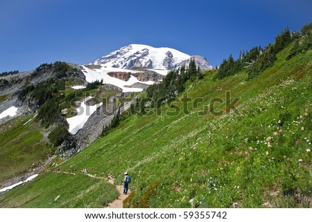 Hiking trail at Mount Rainier on a steep hillside with blooming wildflowers - stock photo