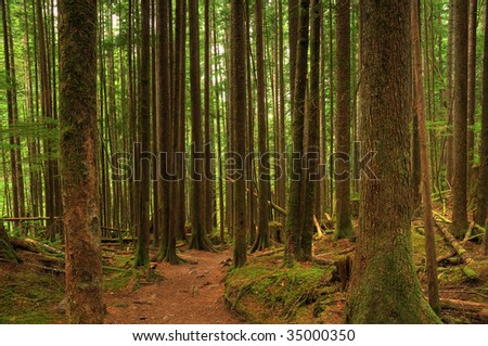 hiking trail deep inside the evergreen forest with densely populated trees - stock photo