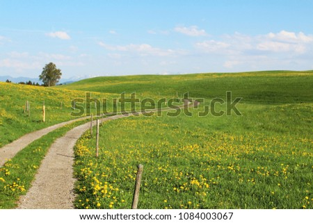 Hiking trail (from the left side near a fence) trough the beautiful hilly alpine upland in spring, dandelion blossom, Allgäu, Bavaria