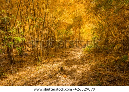 Hiking trail in bamboo forest in warm tone of autumn - stock photo