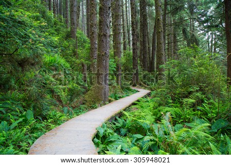 Hiking trail in Fern Canyon in the Prairie Creek Redwoods State Park in Humboldt County, California,