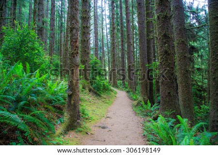 Hiking trail in Fern Canyon in the Prairie Creek Redwoods State Park in Humboldt County, California, - stock photo
