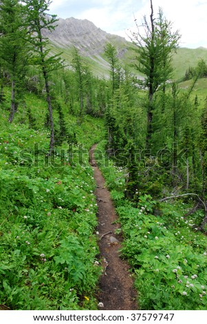 Hiking trail in fir forest and alpine meadow, kananaskis country, alberta, canada - stock photo