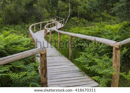 Hiking trail in national park de Meinweg in Limburg. - stock photo