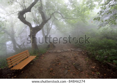 hiking trail in the fog with a chair - stock photo