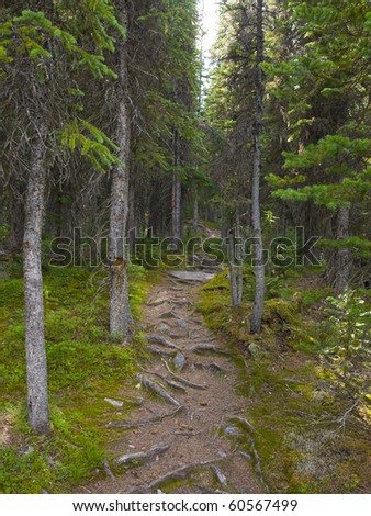 Hiking Trail in the Wilderness, Banff National Park, Alberta, Canada - stock photo
