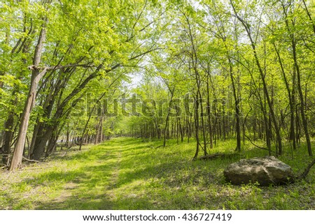 Hiking Trail In Woods - stock photo