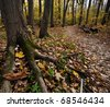 Hiking trail scenery during the autumn season in Ontario, Canada. - stock photo