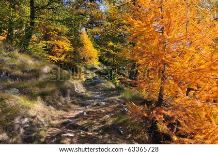 Hiking trail through a beautiful and colorful forest - stock photo