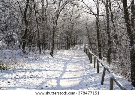 hiking trail through a forest in winter - stock photo