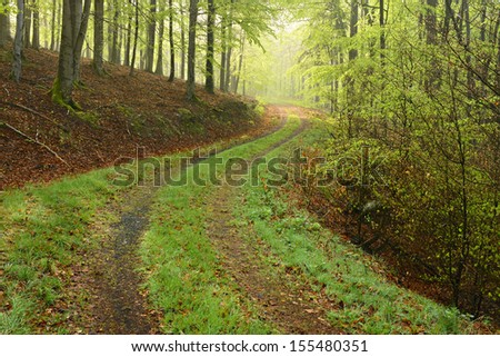 Hiking Trail through Beech Tree Forest  - stock photo