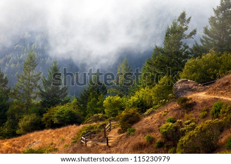 Hiking trail to Muir Woods National Monument.  Trail is in the Mt. Tamalpais state preserve in the San Francisco Bay Area, California - stock photo
