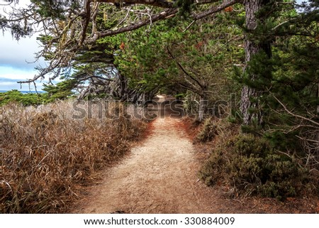 Hiking walking, biking, and enjoying the coastal redwood forest trails and paths along the rugged Big Sur coastline, near Carmel and Monterey, CA. on the California Central Coast - stock photo