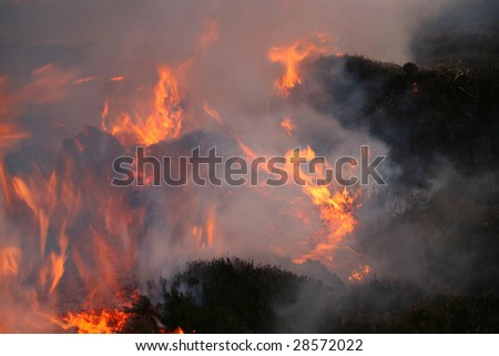 hill fire burning through the heather and peat uncontrolled at Dunnet Head, Scotland