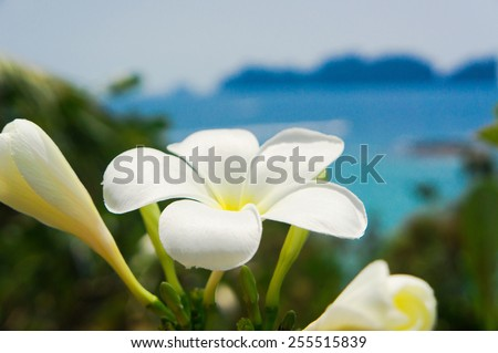 Hill Garden Blooming Trees  - stock photo