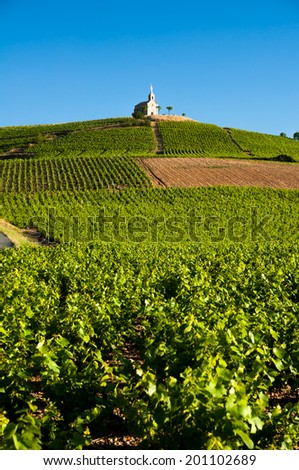 Hill of Fleurie village - stock photo