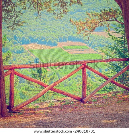 Hill of Toscana with Vineyard in the Chianti Region, Instagram Effect