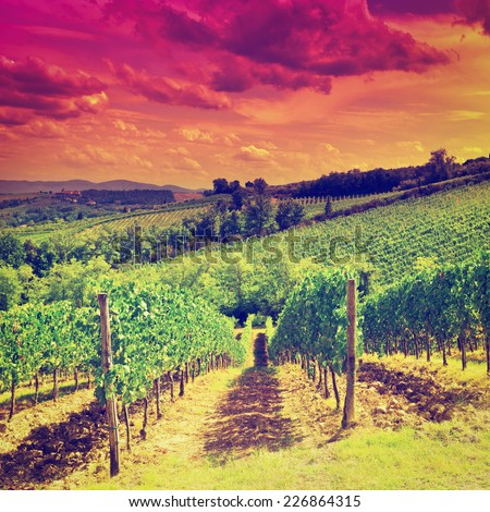 Hill of Tuscany with Vineyard at Sunset, Instagram Effect - stock photo
