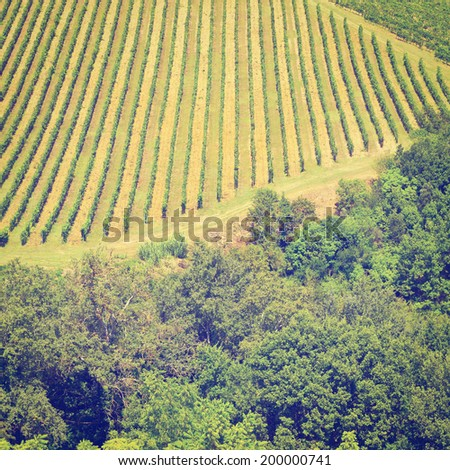 Hill of Tuscany with Vineyard in the Chianti Region, Instagram Effect - stock photo