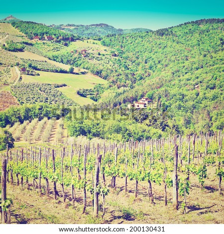 Hill of Tuscany with Vineyard in the Chianti Region, Instagram Effect