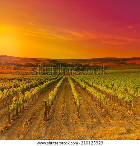 Hill of Tuscany with Vineyard in the Chianti Region, Sunset, Instagram Effect - stock photo