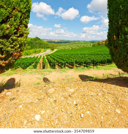 Hill of Tuscany with Vineyards and Cypresses, Vintage Style Toned Picture  - stock photo