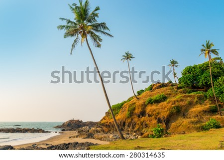 hill with coconut palm trees in a tropical resort location - stock photo