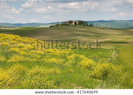 Hill with yellow wild flowers - stock photo