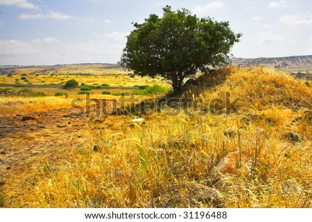 Hills and fields with a yellow dry grass and a tree on a background of the pale cloudy sky - stock photo
