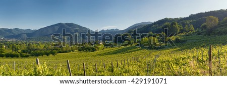 Hills and vineyards in northern Italy - stock photo