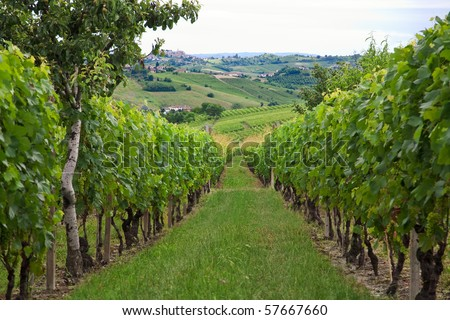 Hills and vineyards in Piedmont (Italy) - stock photo