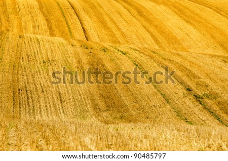 hills in the wheat fields - stock photo