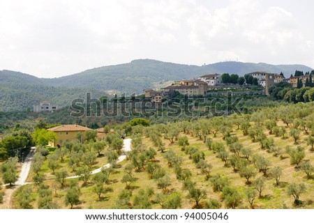 Hills in Tuscany near Artimino (Firenze, Italy) with olive trees at summer