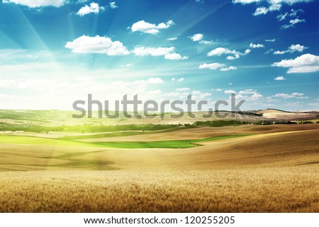 hills of barley in Tuscany, Italy - stock photo