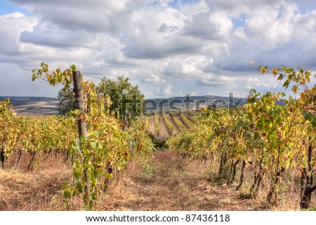 hills of Tuscany with vineyard for production of wines Chianti and Brunello di Montalcino - stock photo